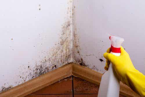 如何清理牆壁和天花板上的潮濕污漬?