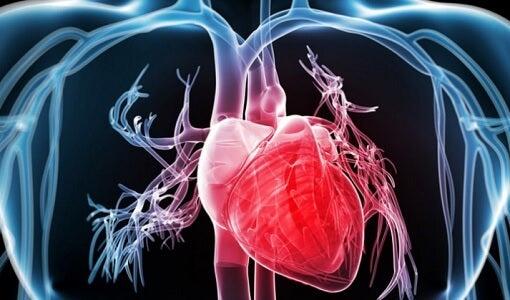 心臟的動脈和靜脈