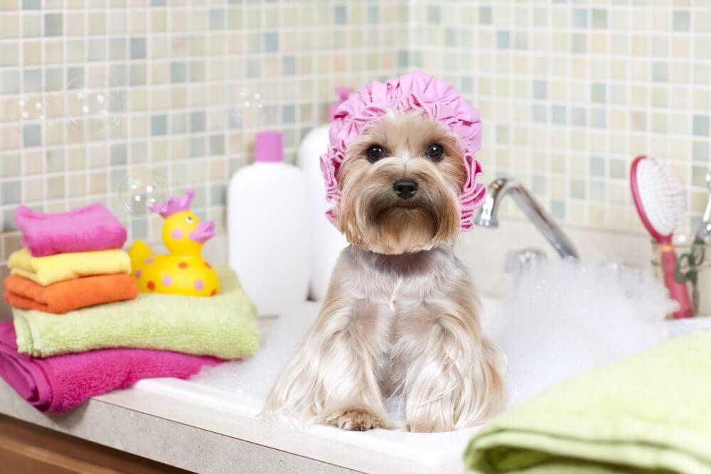 家中清潔 寵物