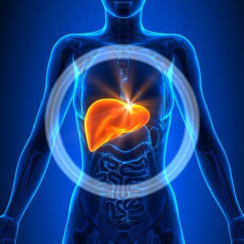 發炎的肝臟 功能