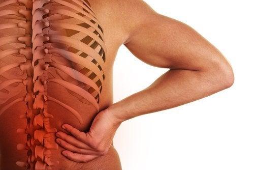 脊椎和器官之間的關係