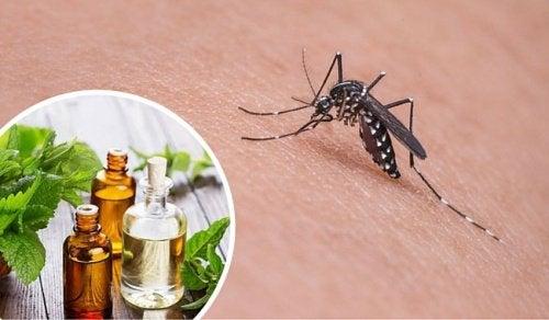 驅蚊植物–11種天然防蚊妙方