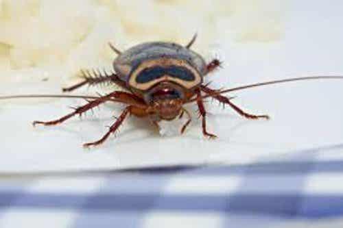 如何自然驅除家裡惱人的害蟲