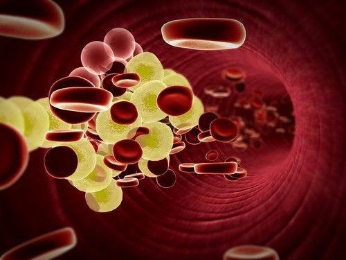 紅血球細胞