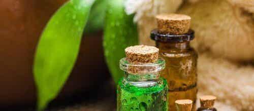 茶樹精油:具有多項好處的神奇精油