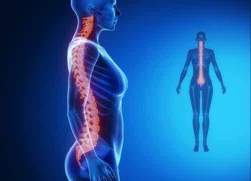 兩分鐘脊椎伸展操