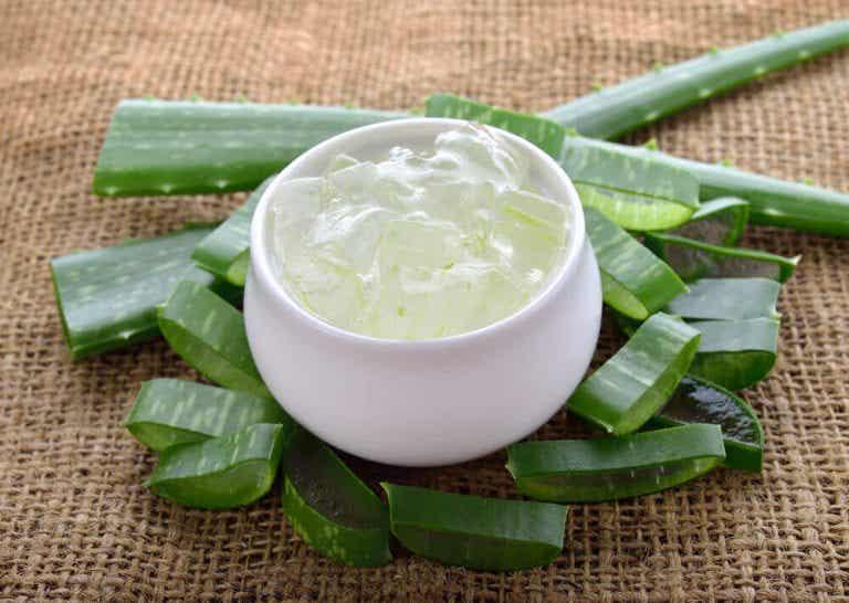 居家植物推薦:蘆薈的5種用途