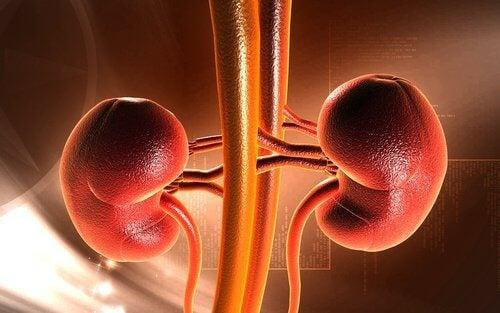 四道美味的腎臟排毒食譜
