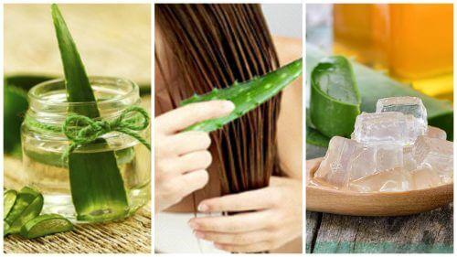五種讓頭髮更有韌性的蘆薈療法
