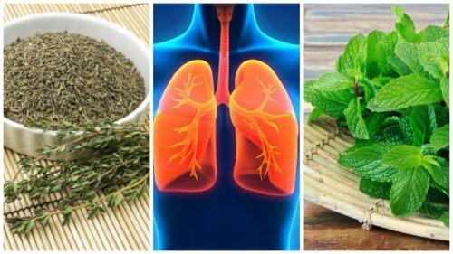 改善肺部健康的八種草藥