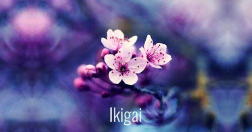 七個促進個人成長的美麗日本詞語