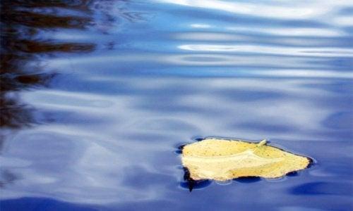 水面上的葉子