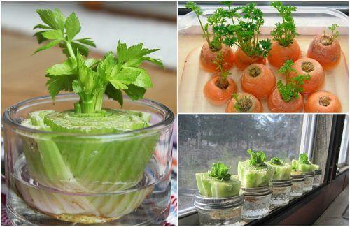 5種容易重新長出來的蔬菜