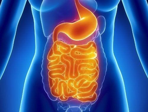 消化系統腸道菌群