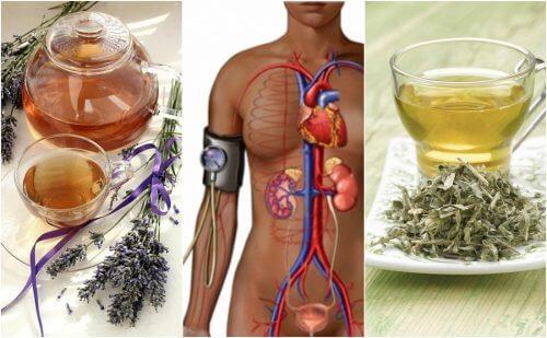 用這五種花茶降血壓