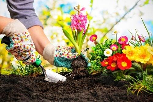 五種創意,在家中打造一個迷你花園
