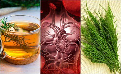 如何用這5種藥草療法改善你的血液循環