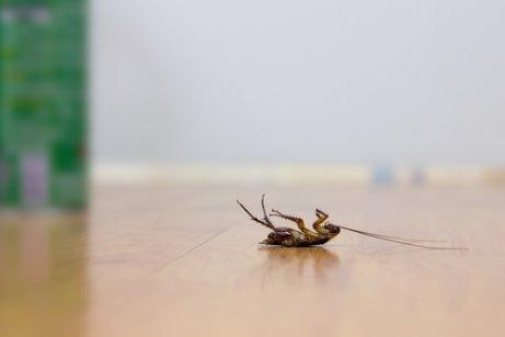 無須殺蟲劑就讓蟑螂遠離的四秘訣