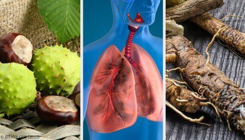 試試這4種讓你呼吸更順暢並強化肺臟的居家療法