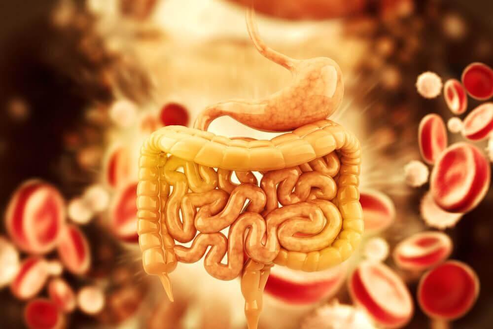如何泡5種幫結腸排毒的茶