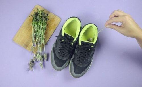 薰衣草與鞋子
