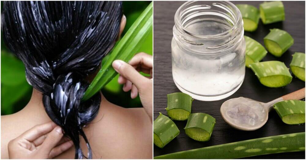 如何使用蘆薈讓頭髮更健康