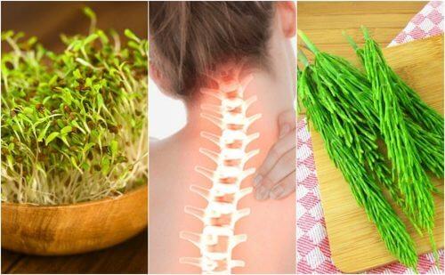改善骨骼健康的7種藥用植物