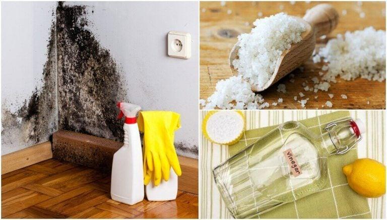5種去除家中潮濕的有效方法