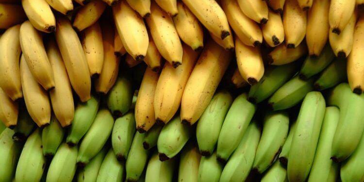 香蕉與芭蕉的三種營養差異