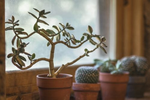 家裡有植物的七個好處