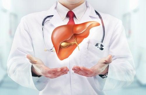 肝臟-心臟
