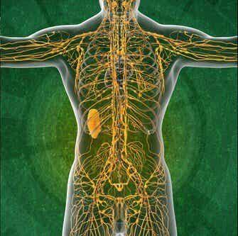 淋巴系統的四個有趣事實