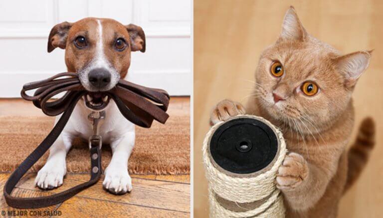 找出什麼寵物對你最有益