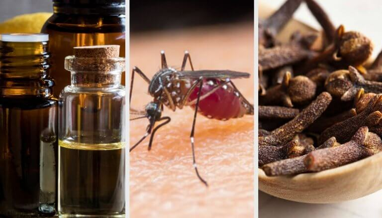 打跑蚊子的10種香氛