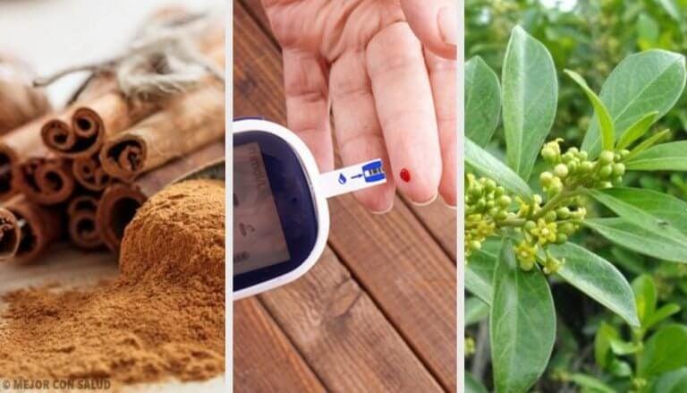 糖尿病的5種藥用植物:它們真的有效!