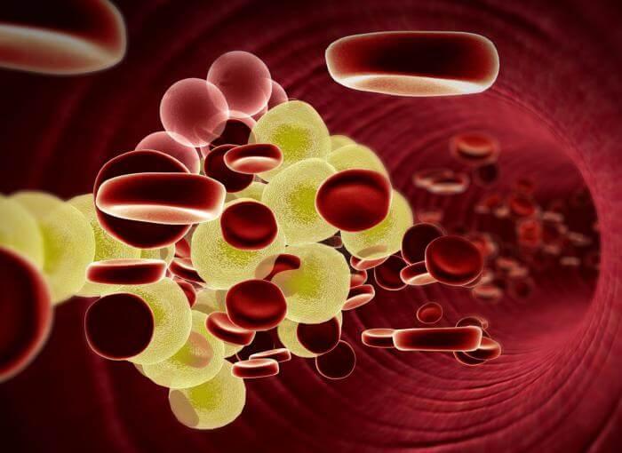 芫荽-膽固醇