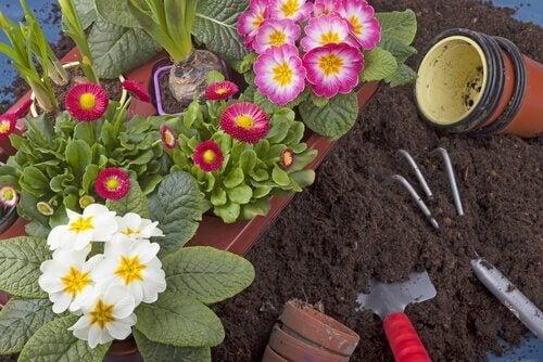 10種你能輕易在花園裡栽種的植物