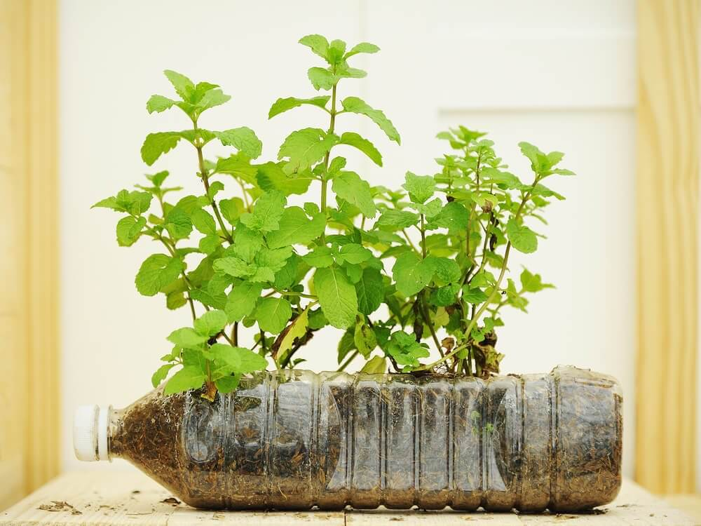 寶特瓶盆栽