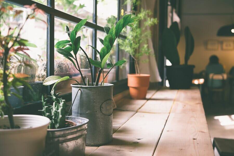 窗台上的盆栽