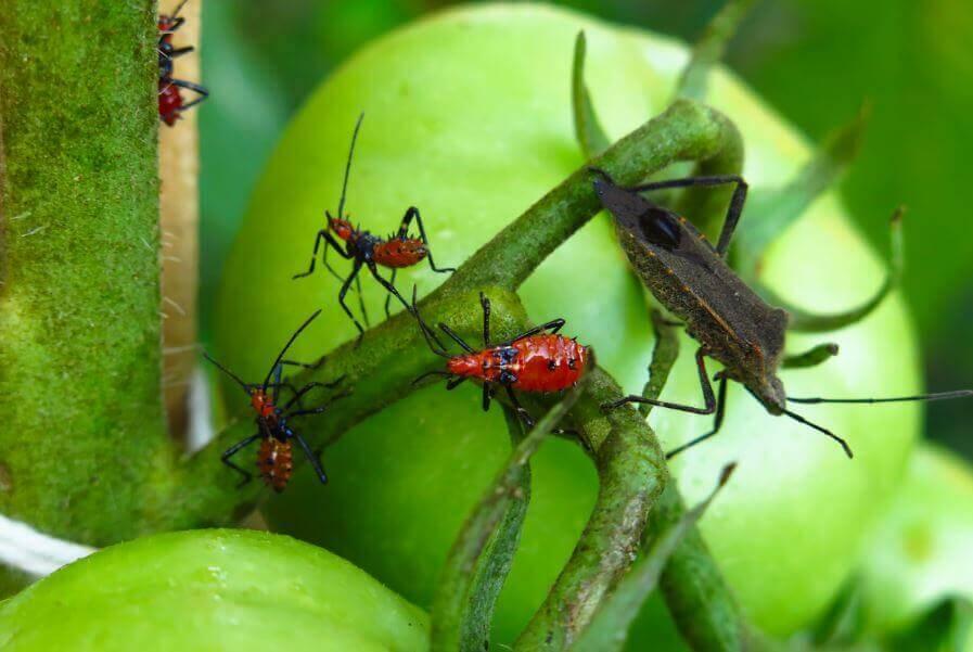 撲殺害蟲的5種毒藥
