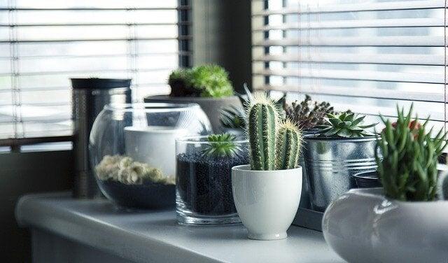 五種種植仙人掌的創意