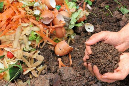 為你的植物製作天然堆肥的5種方式