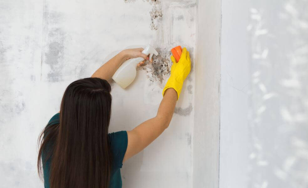 如何從你的家中清除黴菌