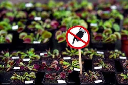 七種家中不該種植的危險植物