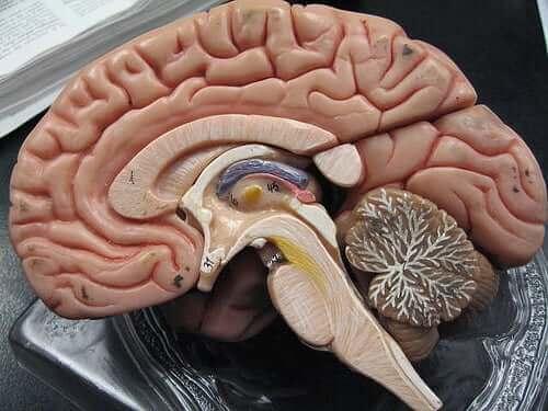 蜘蛛網膜和硬腦膜下腔出血