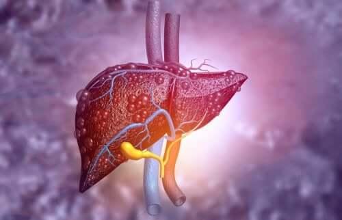 阿巴卡維-肝臟