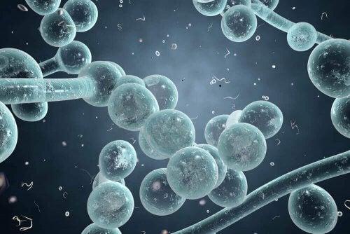 陰道酵母菌感染