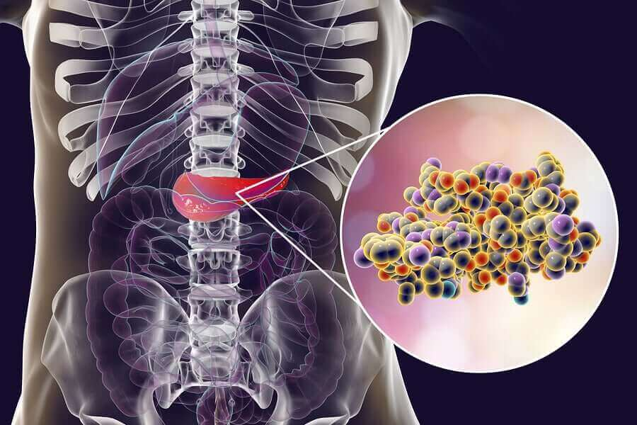 腸道微生物菌群