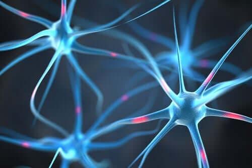 神經元連結