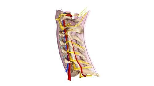 關於頸脊神經你必須知道的事